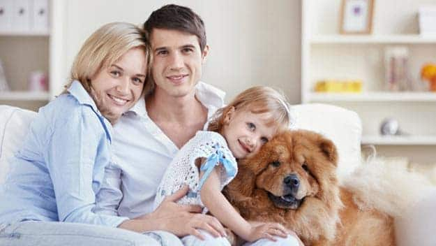 Wills & Trusts dog-young-family Direct Wills Netherton